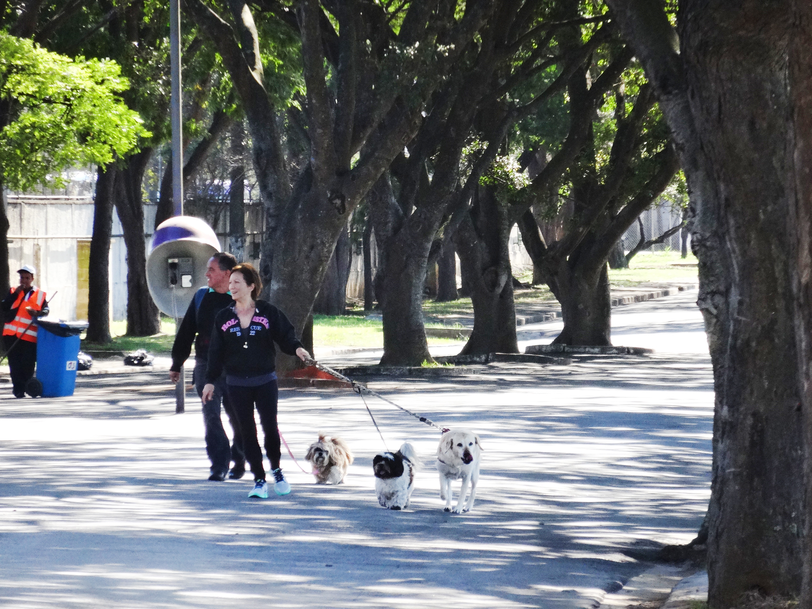 Casal passeio com os cachorros. Foto: Marcelo Iha/ SPTuris.